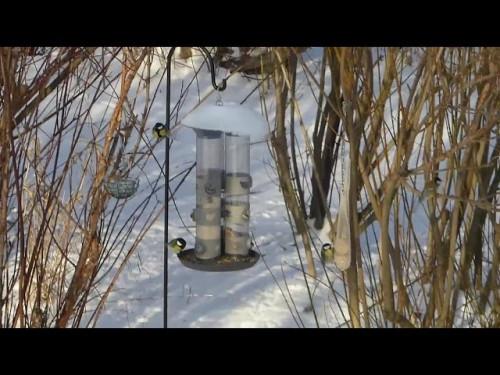 Vogel-TV * Futtersilo, die Zwote
