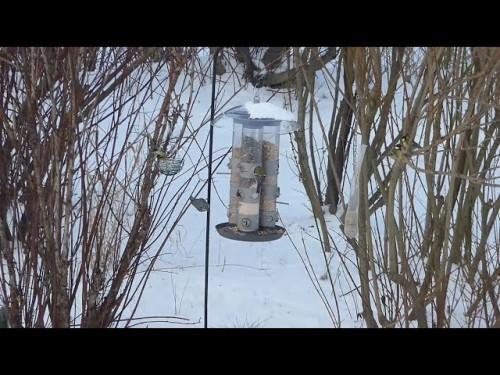 Vogel-TV * Futtersilo, die Erste